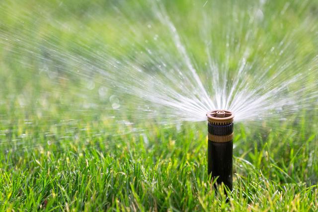 sprinkler_grass.jpg