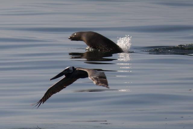 sea-lion-bird-oilspill-getty.jpg