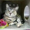 LAist Pets Of The Week: Shy Beauty Roxy And Lovely Lulu