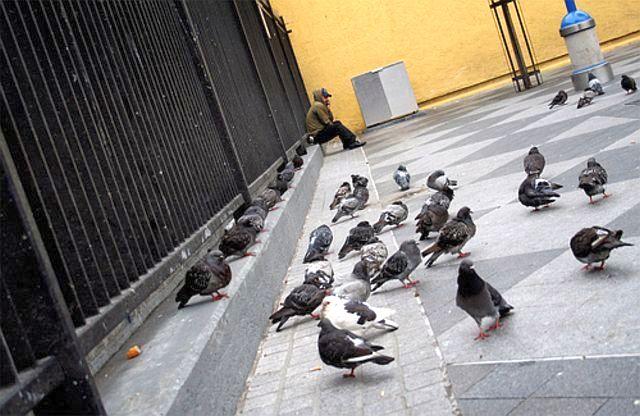 pigeons%20in%20the%20city.jpg