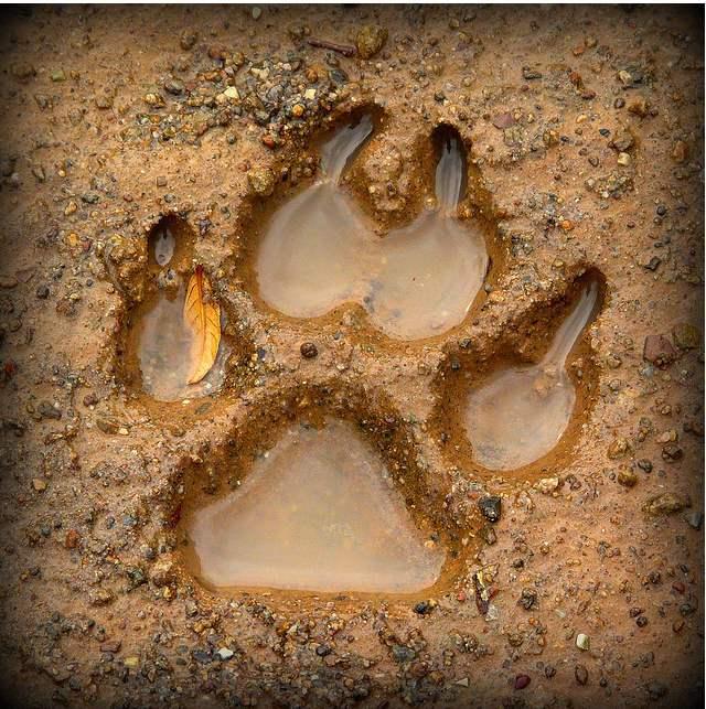animal-track.jpg