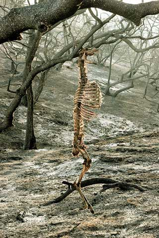 Colin Brown's Griffith Park Fire Aftermath Photos in a Gallery Exhibit