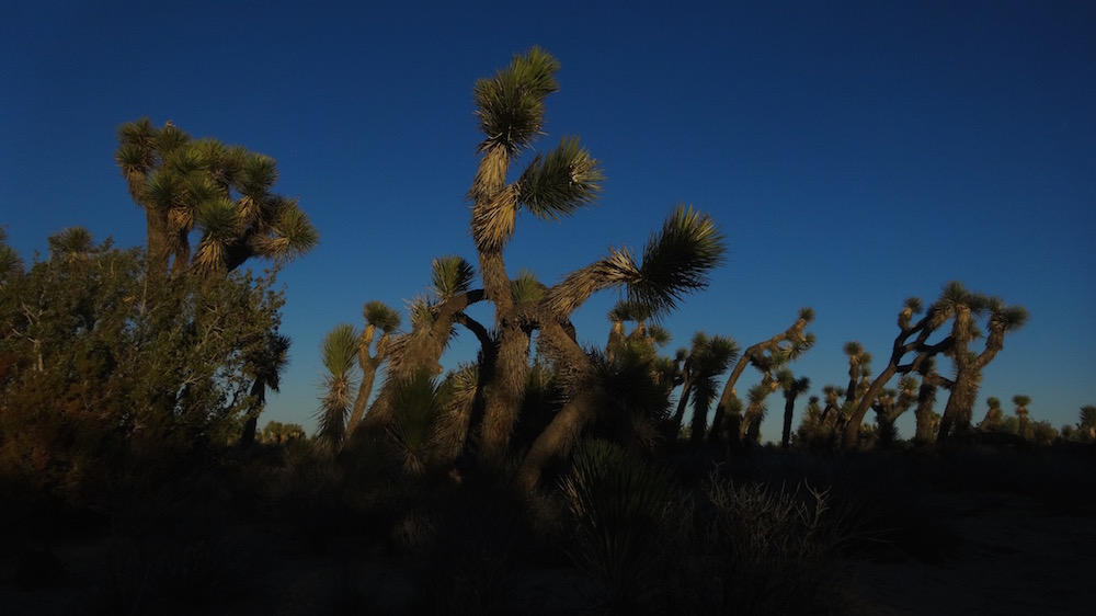 arthur-b-ripley-desert-woodlands-state-park.jpg
