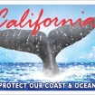 Popular Whale Tail License Plates Have Raised $95 Million For Environmental Initiatives Since 1997