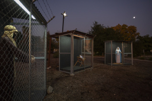 A Nativity Scene In Claremont Features Baby Jesus, Mary And Joseph In Cages