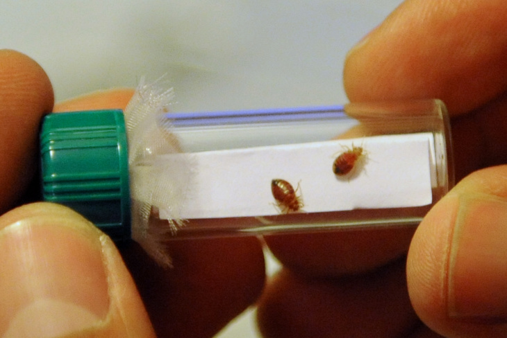 An LAPD Jail Is Infested With Bed Bugs: LAist