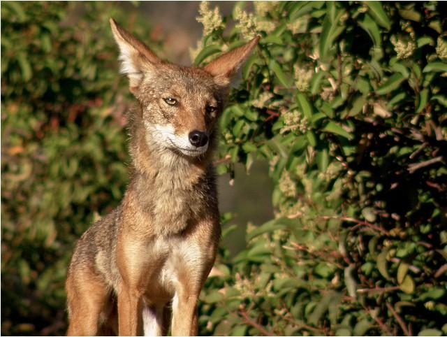 griffith_park_wildlife.jpg