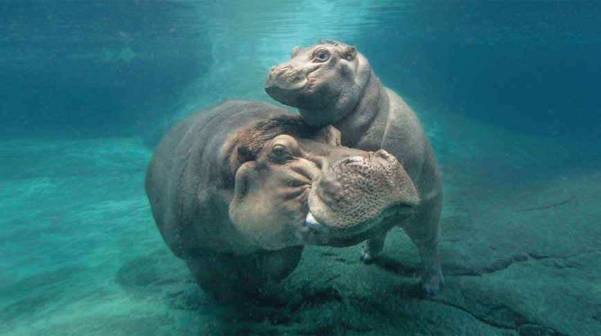 5 Underrated Exhibits At The San Diego Zoo That Are Worth
