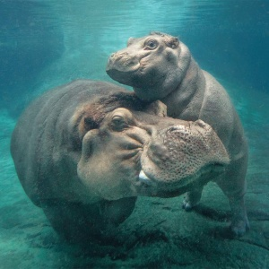 5 Underrated Exhibits At The San Diego Zoo That Are Worth Your Time