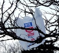 plastic-bag-tree.jpg
