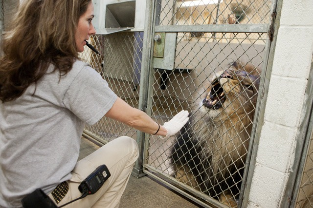 national-zoo-keeper-big-cats.jpg