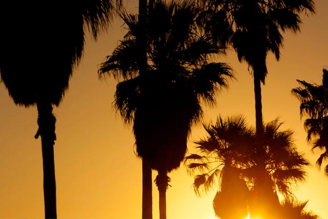 heat_palms_640.jpg