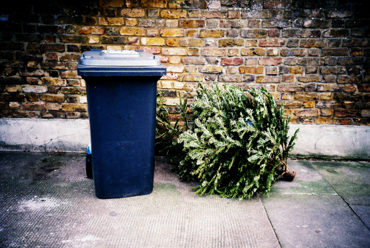 If you live in Los Angeles, you can basically put your tree out with the  rest of your recyclables on collection day. (Jonny Hughes via Flickr  Creative ... - How To Recycle Your Christmas Tree In LA (City Or County): LAist