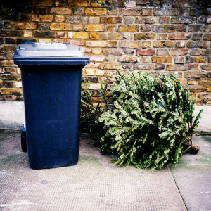 How To Recycle Your Christmas Tree In LA (City Or County)