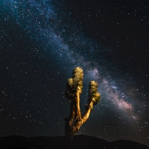 Joshua Tree Is Now Officially A 'Dark Sky' Park Thanks To Its Magnificent Stargazing
