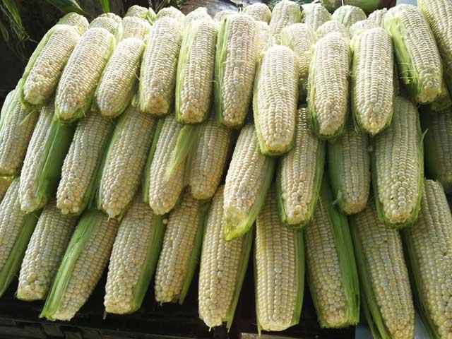 hp_corn.jpg