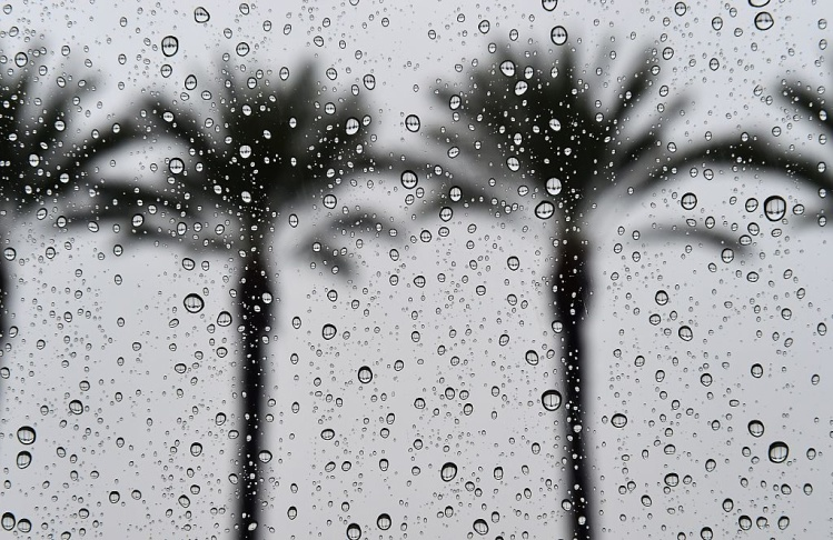 LA's Warm November Is Going From Record Highs To Rain This Week: LAist