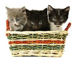 basket-of-kittens.jpg