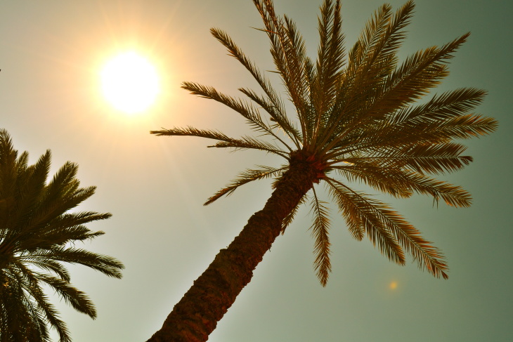 Palm tree and sun