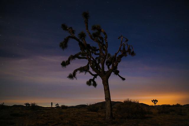 joshua-tree-1.jpg