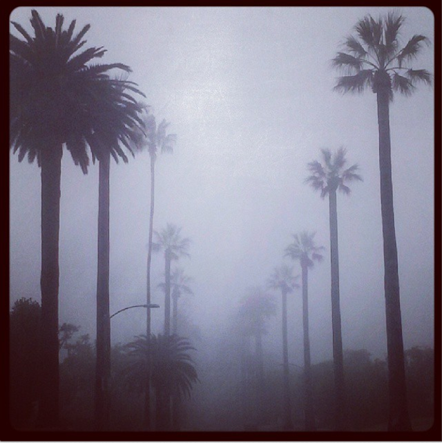 foggy-beverly-hills.png