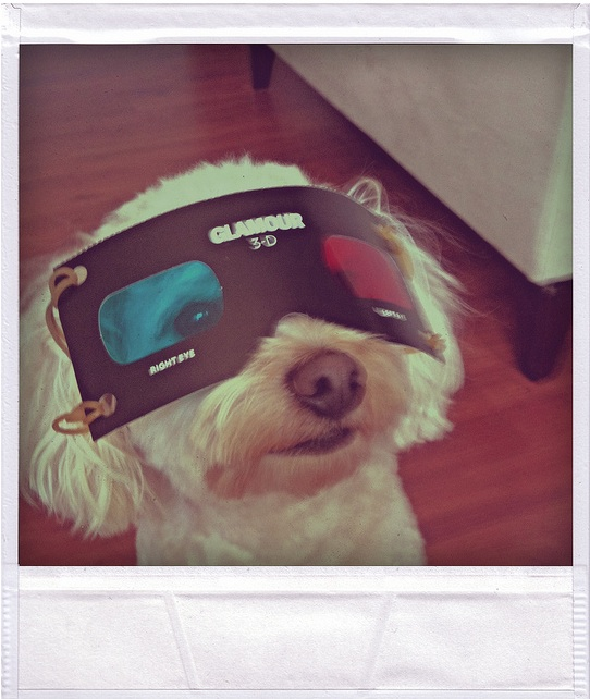 3D_Dog.jpg