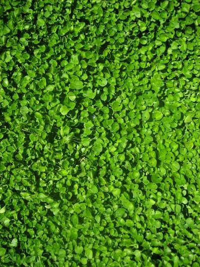 Close up of flora