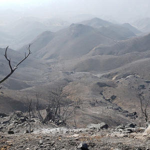 How Will The Santa Monica Mountains Recover From The Woolsey Fire? We Asked A Scientist