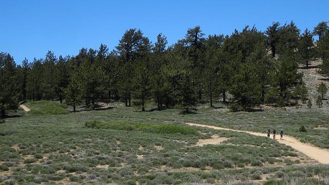 mount-pinos-ventura-county.jpg