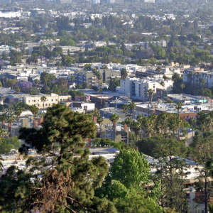 LA's Trees Need A Little More TLC ($50 Million Would Do The Trick)