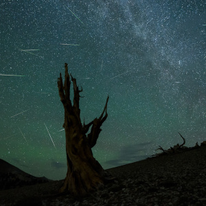 It's Perseid Meteor Shower Time, LA. Here Are Pro Tips For Catching The Light Show