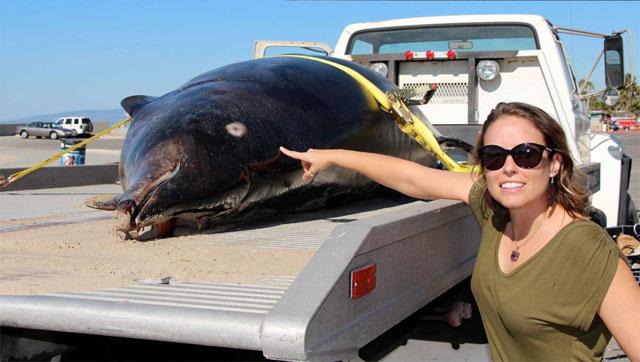 rare_whale.jpg