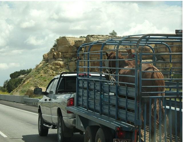 horse_trailer.jpg