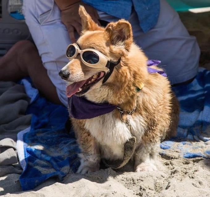 Queen S Best Stumpy Dog Rescue
