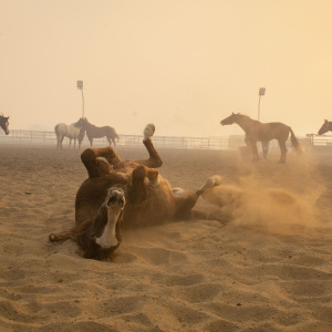 These Photos Of Horses Evacuating The Easy Fire Are Heart-Wrenching