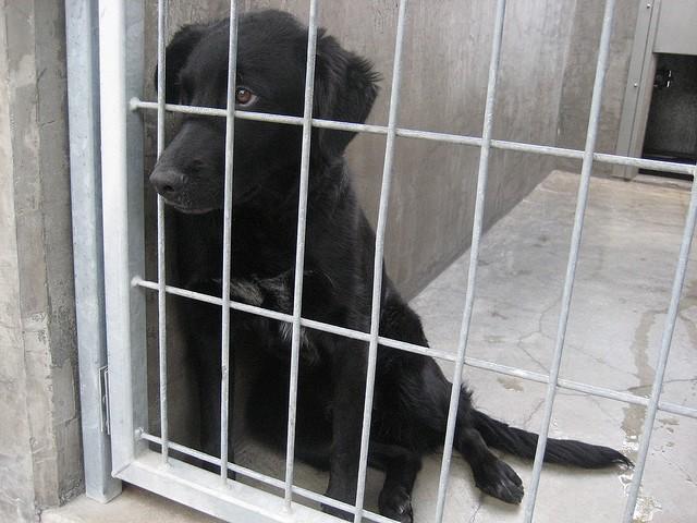 dog-cage-shelter.jpg