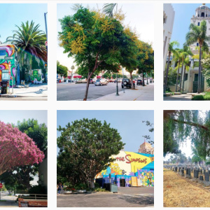 An (Instagram) Field Guide to LA's Trees