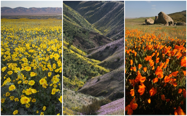 carrizo-plain-wildflowers.jpg