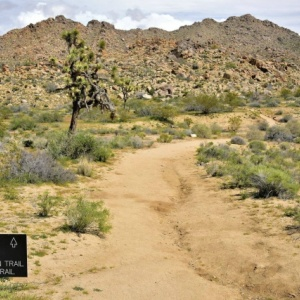 Two Bodies Found By Search Team In Joshua Tree National Park