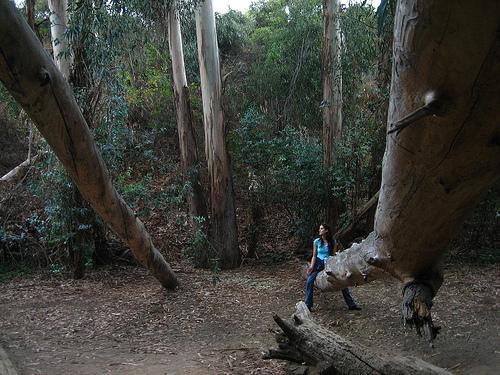 Liz on the Trees