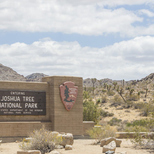 Joshua Tree Is Not Closing After All. The Park Service Says Volunteers Are To Thank