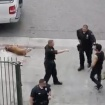 Dog Fatally Shot By Off-Duty LAPD Officer Working Security On A TV Shoot