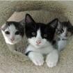 LAist Pets Of The Week: Beautiful Brianna & Sweet Sassafras