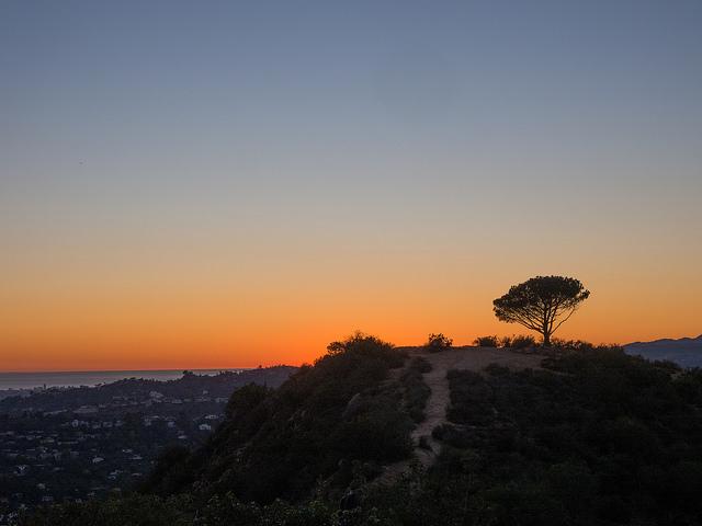 wisdom-tree-cahuenga-peak.jpg