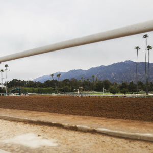 Another Horse -- That Makes 22 -- Has Died At Santa Anita Racetrack