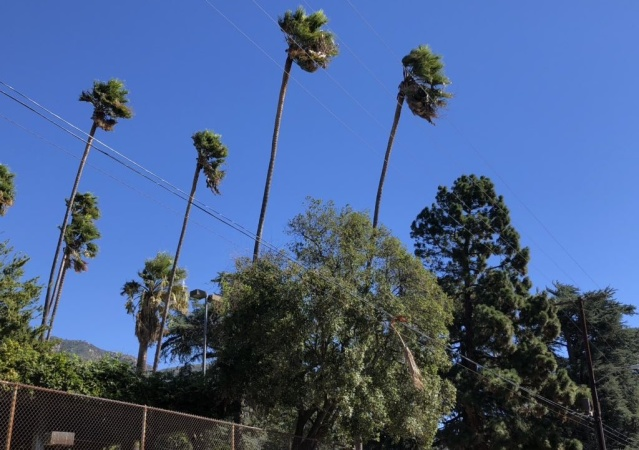 Santa Ana Winds Knocked Out Power For Thousands Across SoCal