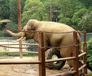 Judge Tells Animal Activist Robert Culp No, LA Zoo Elephant Exhibit to Remain Open