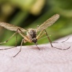 California Reports First West Nile Deaths Of The Year, Including An L.A. County Resident