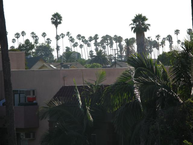 palms as far as the eye can see