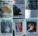 lost-cat-collage.jpg